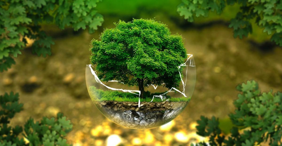 4 strategii pentru o viata eco