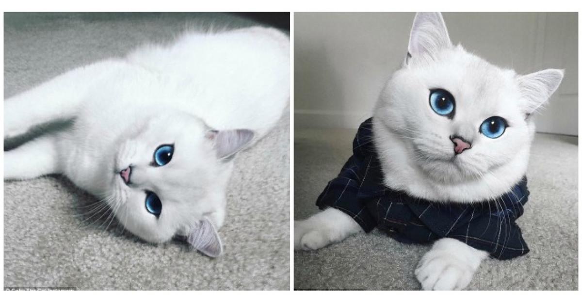 Aceasta este cea mai frumoasa pisica din lume