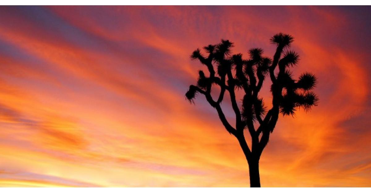 Copacul singur din desert, o pilda despre viata