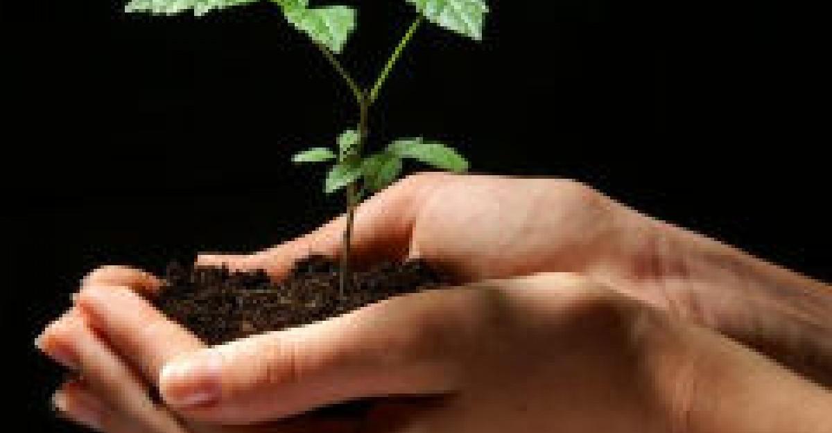 Beneficiile semintelor de in