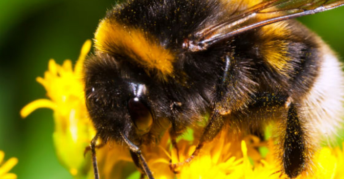Polenul de albine, un aliment natural complex