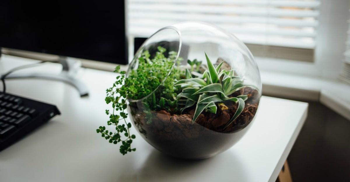 4 decorațiuni cu plante naturale pe care n-ai cum să nu le iubești!