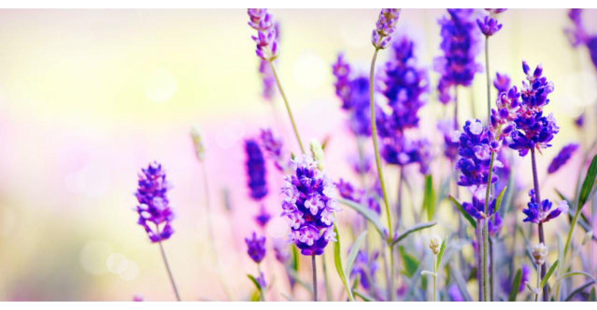 Ne parfumeaza viata si vindeca aproape 100 de boli. Despre ce floare miraculoasa e vorba