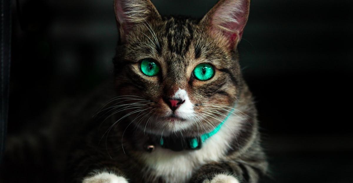 Despre animalele de companie: Pisica, un terapeut in casa ta