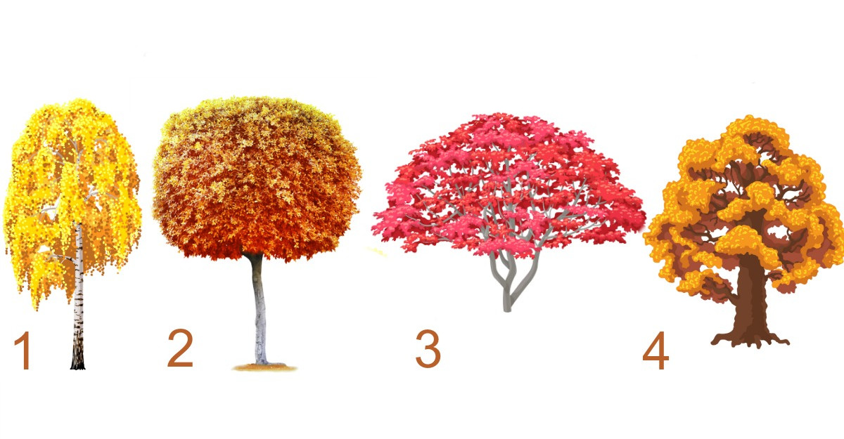 Alege un copac și află ce schimbări te așteaptă în această toamnă