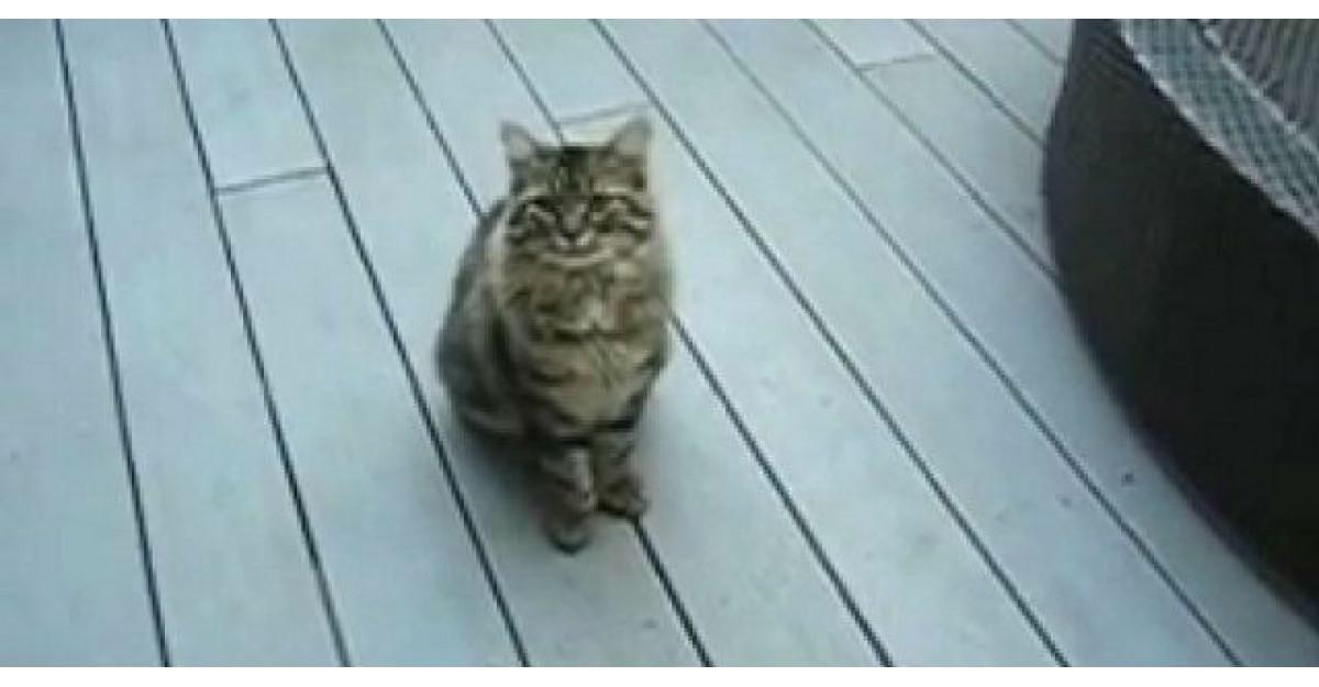 Video: Nimeni nu voia sa adopte aceasta pisicuta cu sase degete. Pana cand o familie s-a indurat