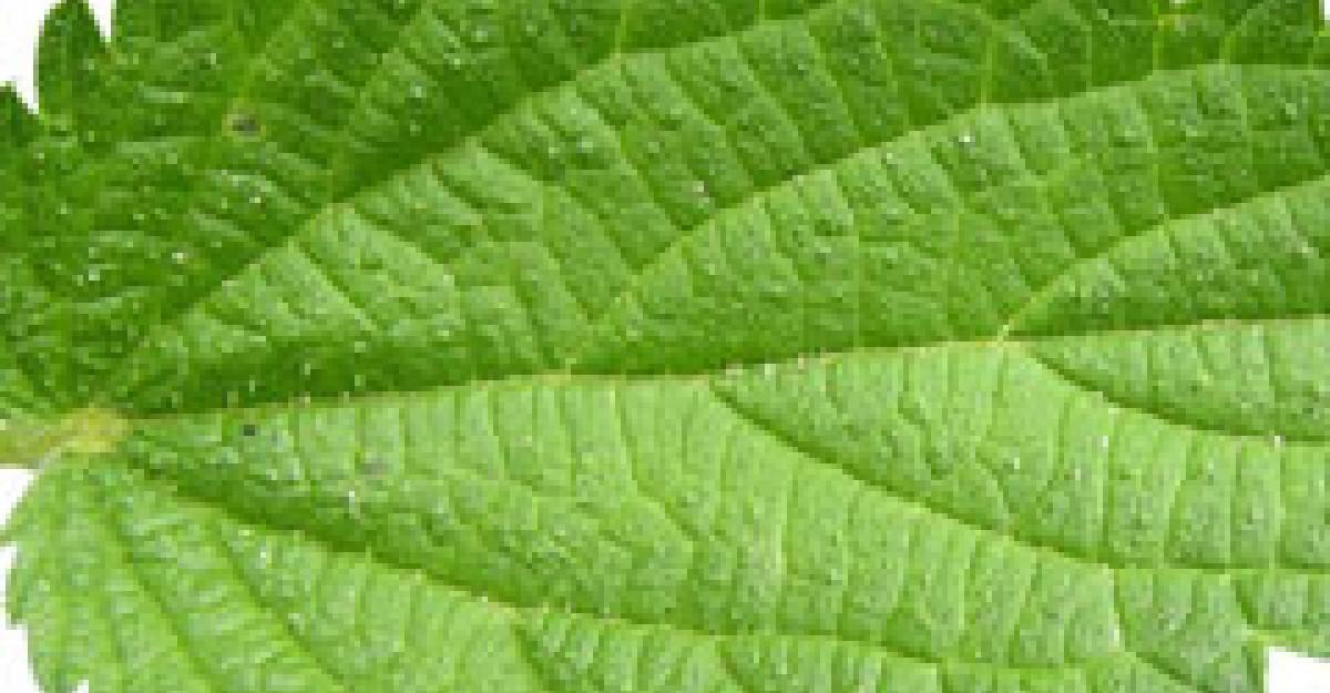 Urzica - Planta medicinala de mii de ani