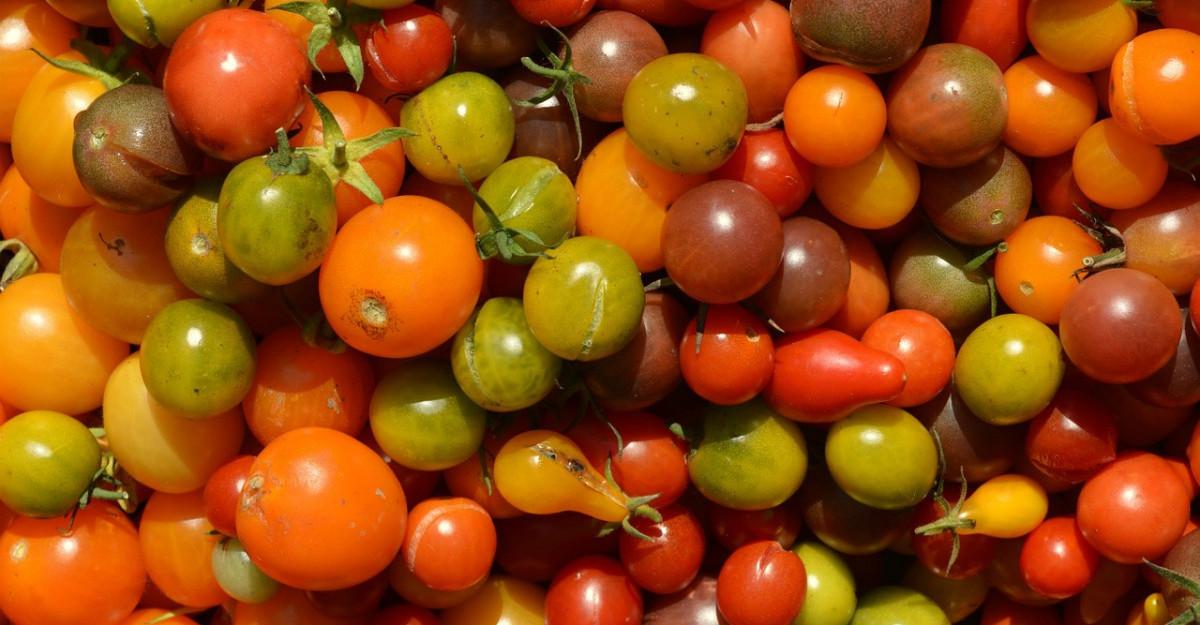 Beneficiile incredibile ale rosiilor cherry