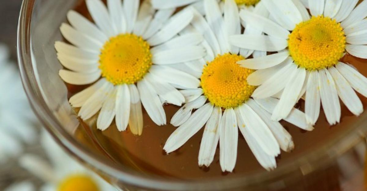 Beneficiile tamaduitoare ale Ceaiului de Musetel