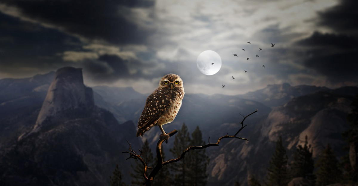 Horoscopul pasarilor sacre