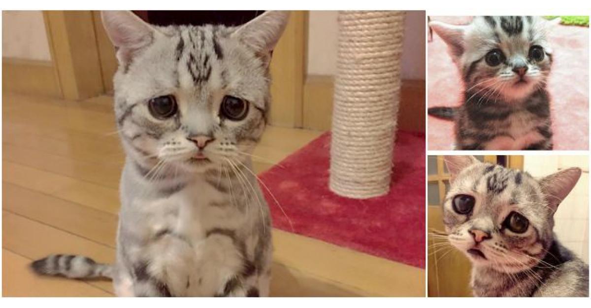 Este noua senzatie a internetului: Cea mai trista pisica din lume