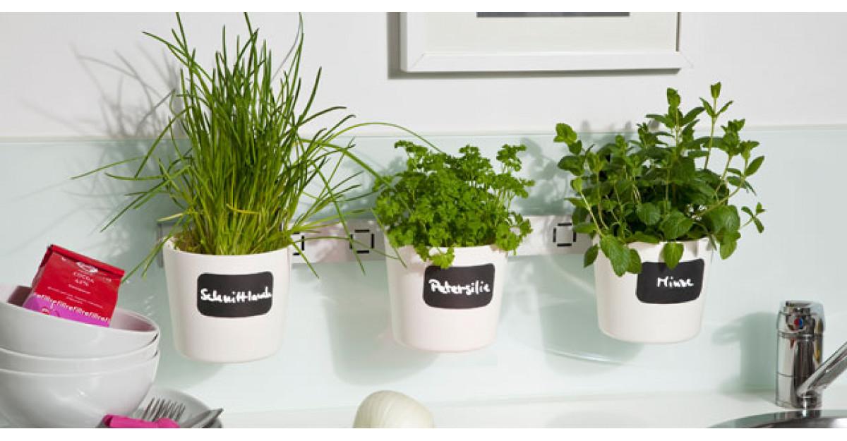5 greseli pe care le faci in cresterea plantelor aromatice