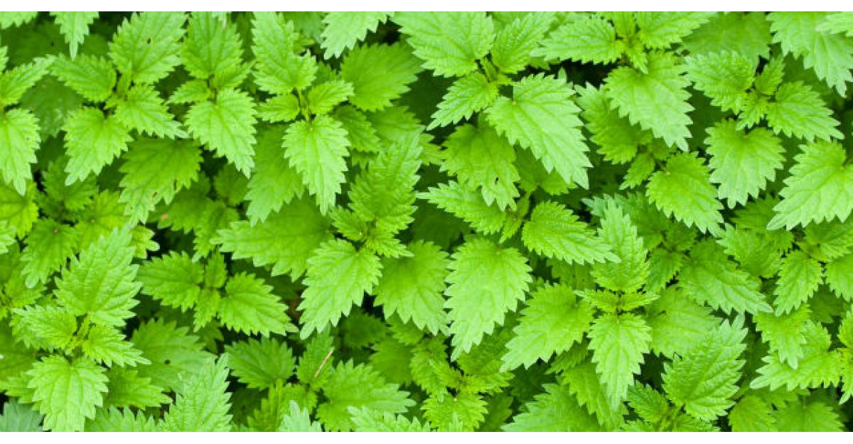 Tratamente naturiste: Remedii pentru cei care au probleme cu pancreasul
