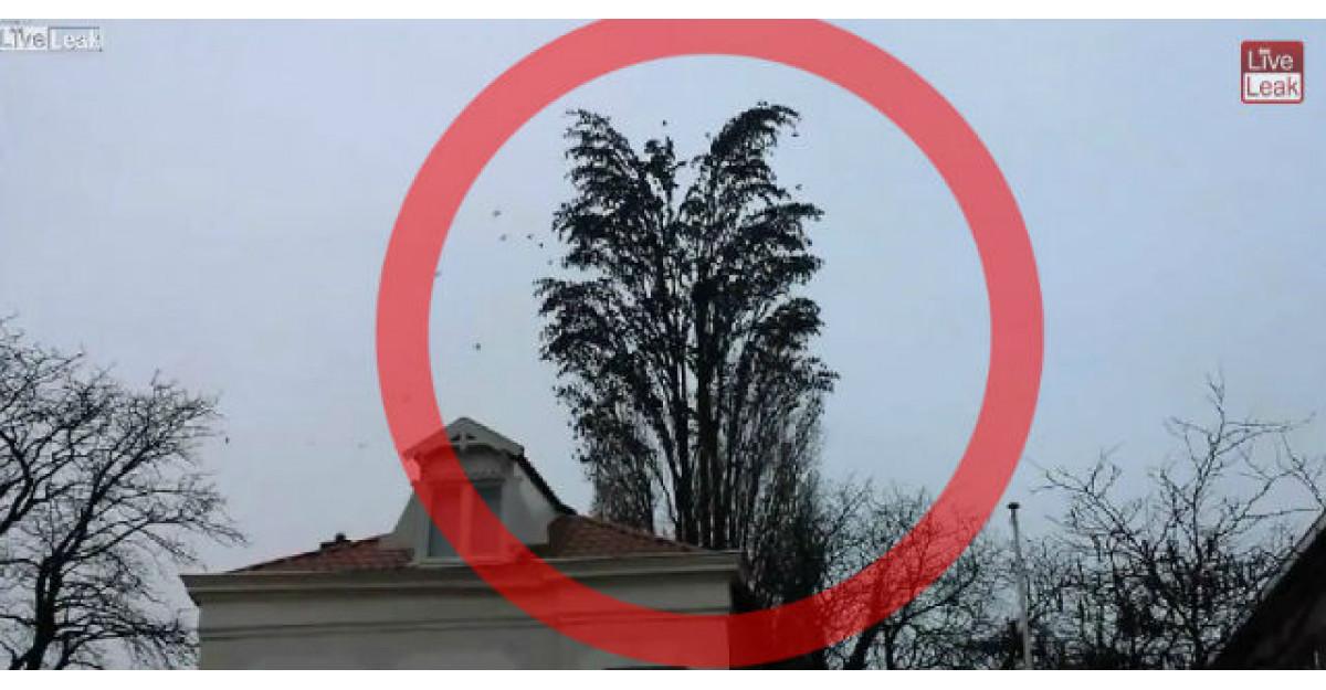 Video: Arata ca un copac obisnuit. Ce se intampla cand vin pasarile? Este MAGIC