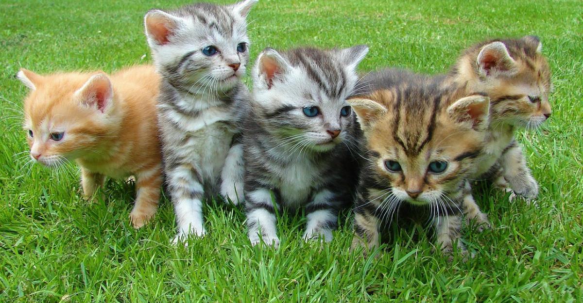 Pisicile ne pot vindeca. De ce este bine sa avem o pisica in casa noastra?