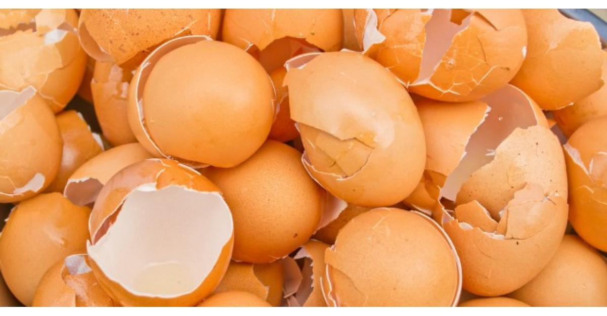 Dupa ce vei citi ASTA, nu vei mai arunca NICIODATA cojile de ou