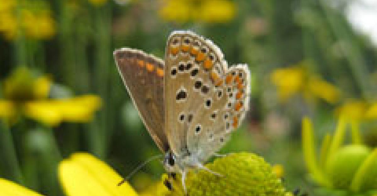 Beneficiile tamaduitoare ale polenului