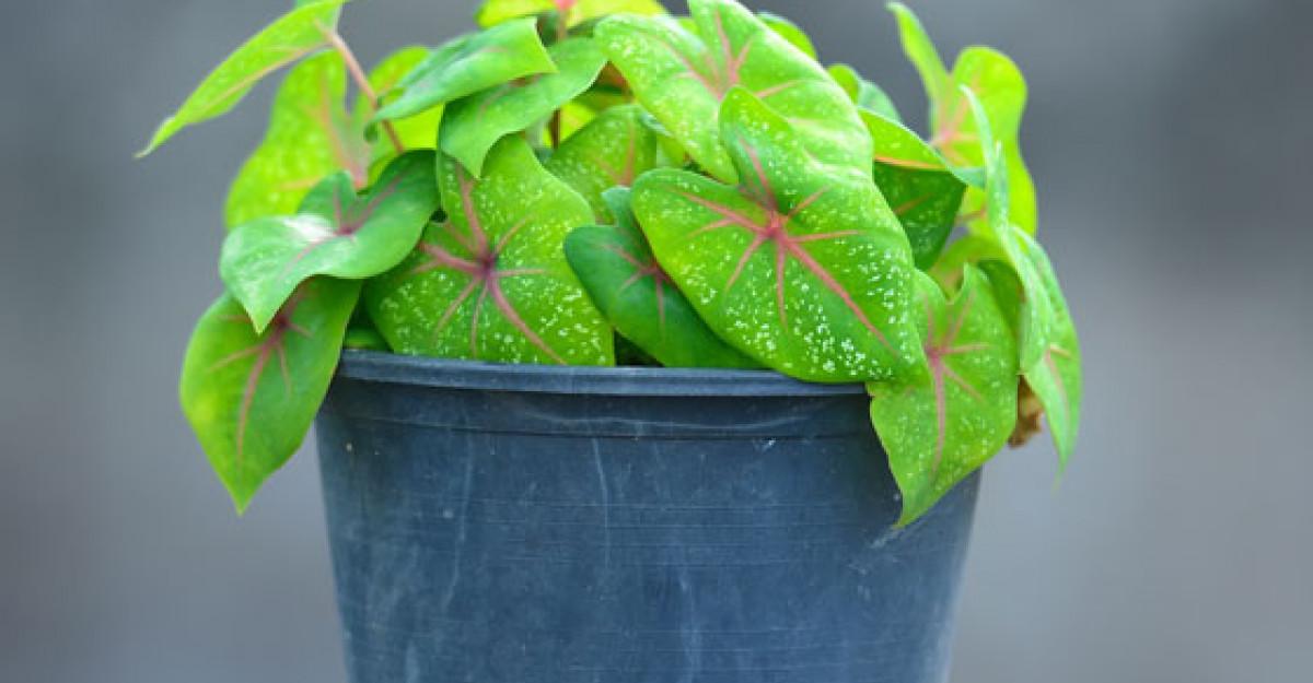 Plante pe care le poti creste in baie - Partea a II-a