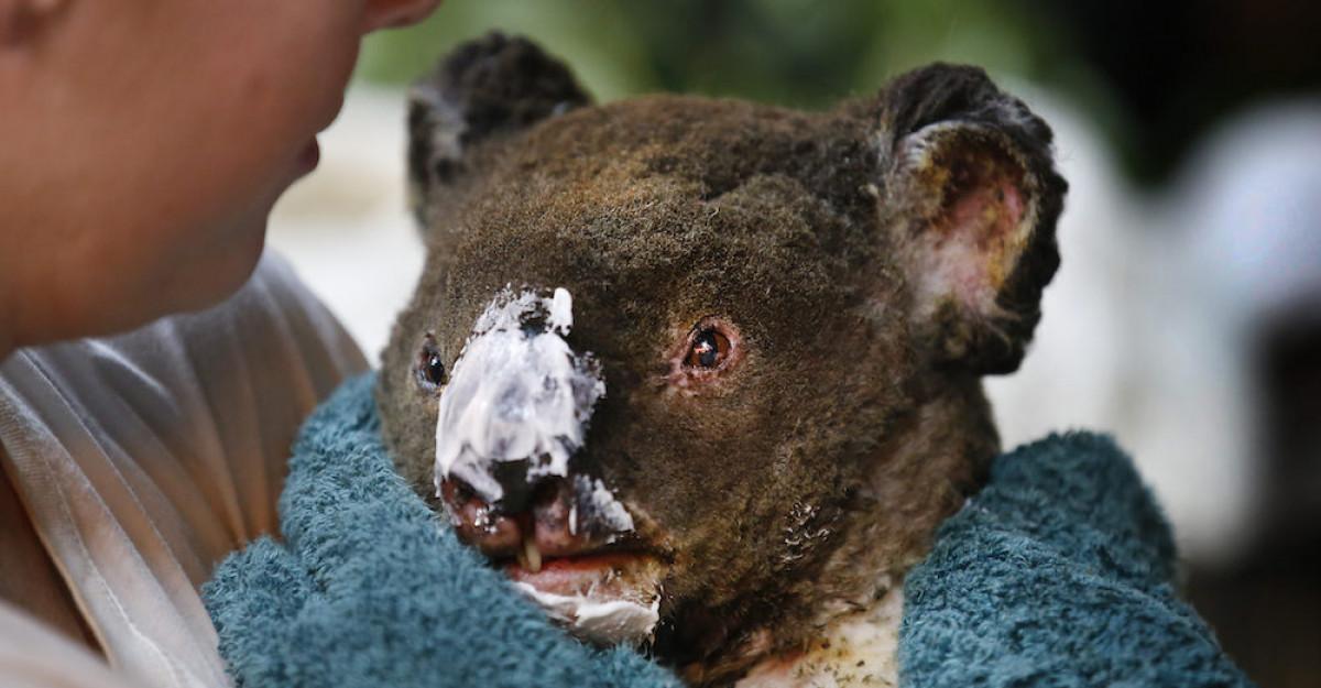 Revolut se aliază cu Crucea Roșie și WWF într-un apel de urgență privind incendiile de vegetație din Australia