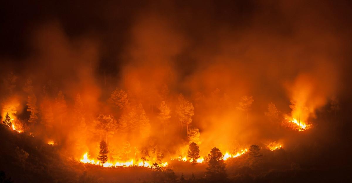 24 de oameni și un MILIARD de animale au murit în incendiile din Australia