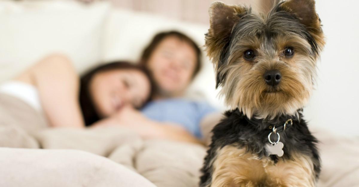 De ce sa lasi cainele sa doarma cu tine in pat? Avem noi 7 super motive