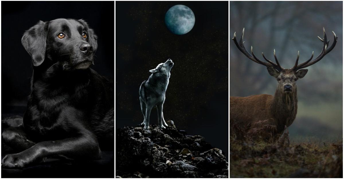 Alege un animal din imaginile de mai jos și află ce spune asta despre tine