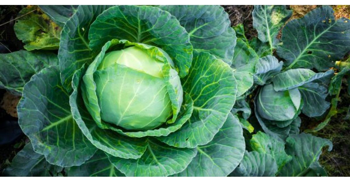 6 legume care te feresc de cancer