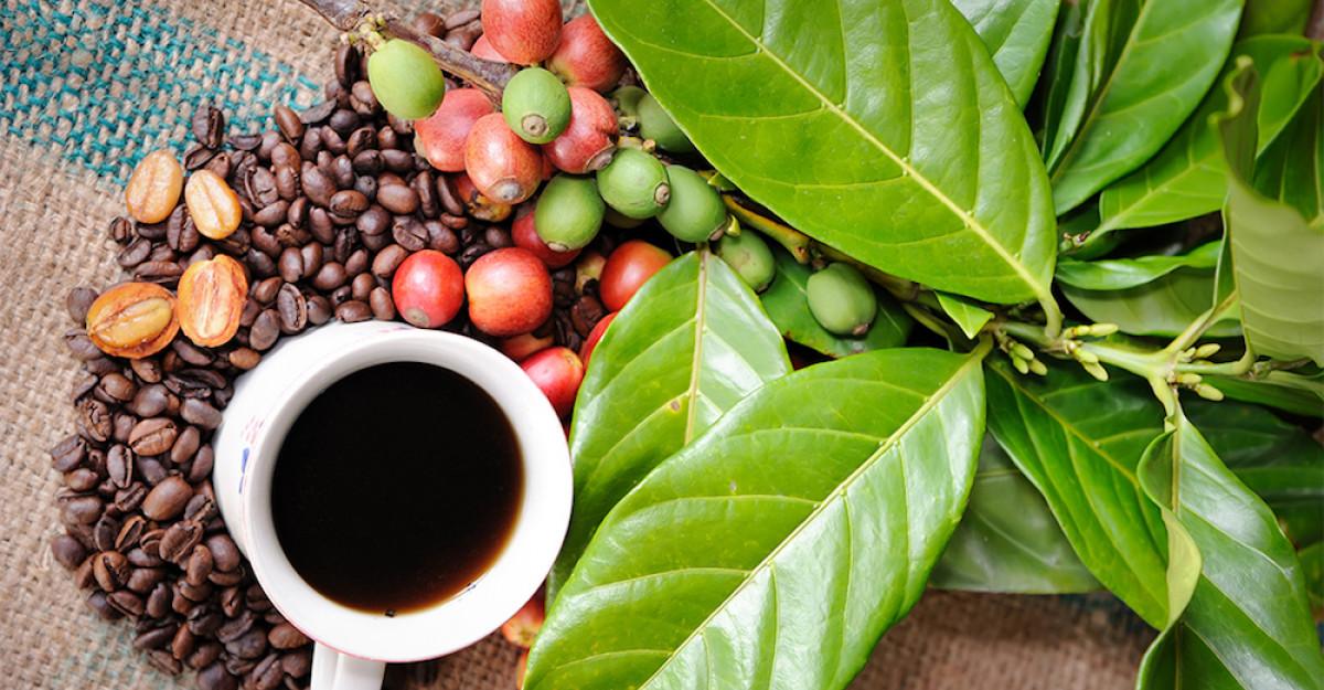 7 curiozități despre cafea - una dintre cele mai populare băuturi din lume, după apă