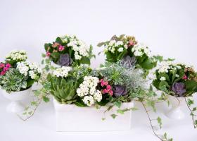 (P) Aranjamente florale de inchiriat - o premiera in domeniul organizarii evenimentelor private si corporatiste in Romania