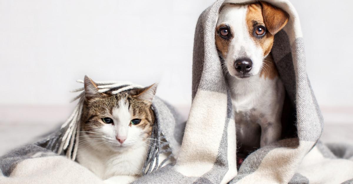 Șapte motive pentru a adopta un animal de companie