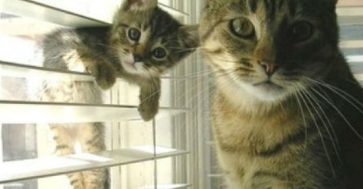 16 Poze haioase cu animale