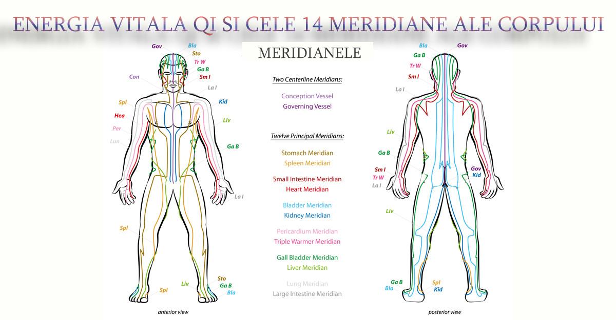 Medicina Traditionala Chineza: Energia vitala Qi si cele 14 Meridiane ale sanatatii