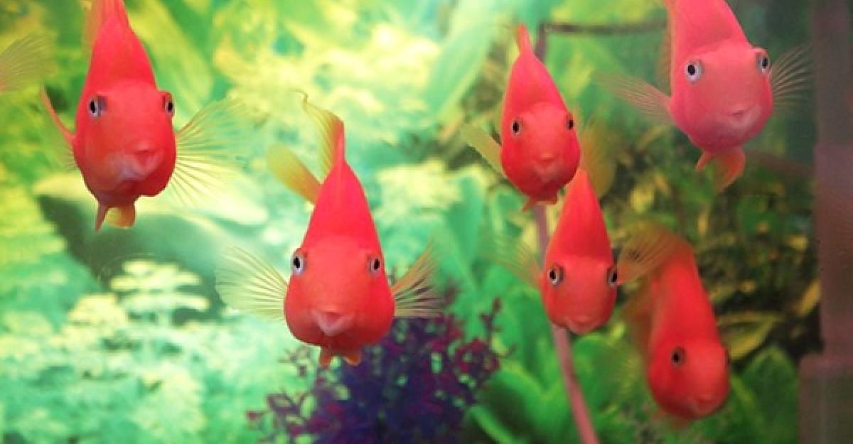 Reguli de aur pentru pasionatii de acvaristica