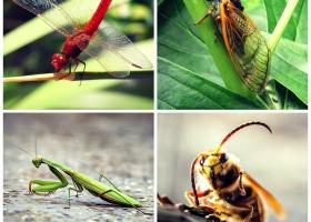 Astrologie: Zodiacul antic al insectelor