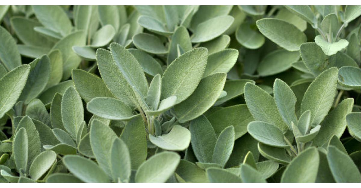 5 plante de ajutor daca ai gingivita