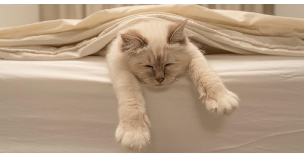Dormi cu animalul tau de companie in pat? Ce spun medicii despre acest obicei