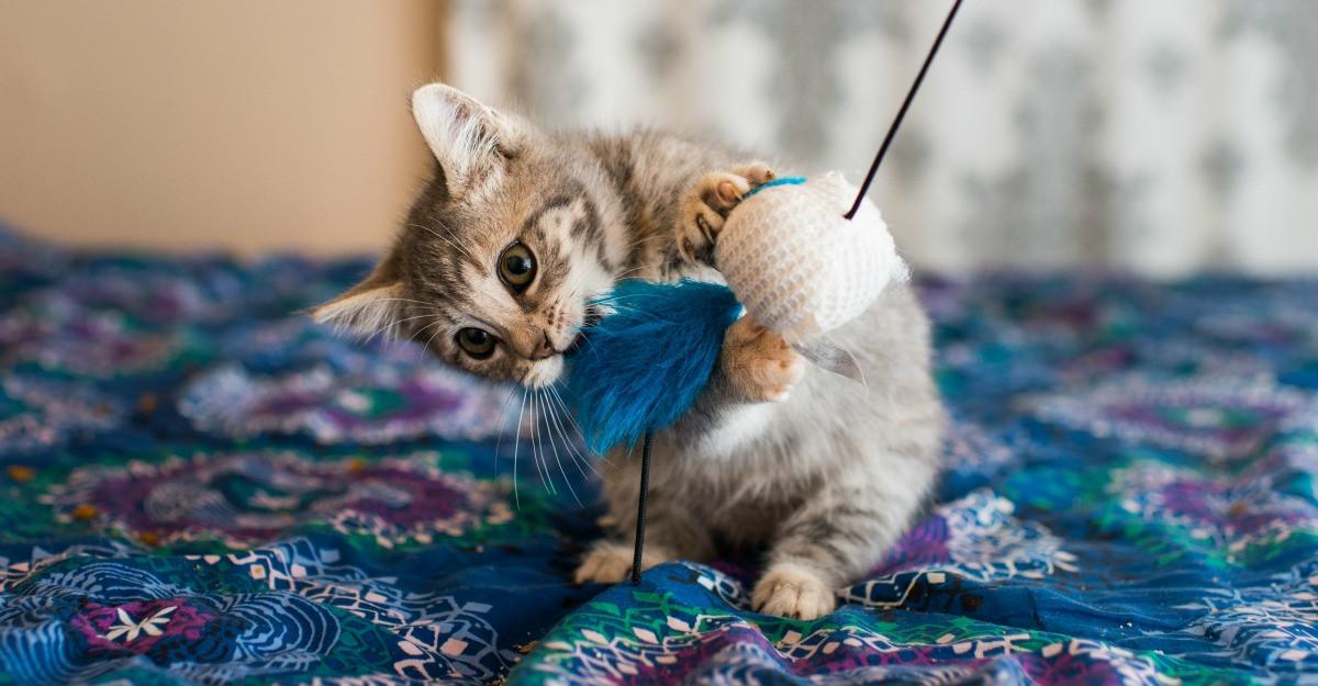 Cele mai interactive jucarii pentru pisici