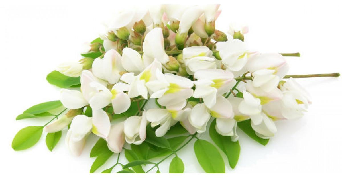 Tratamente naturiste cu flori de salcam: Combat stresul, migrenele si tulburarile digestive