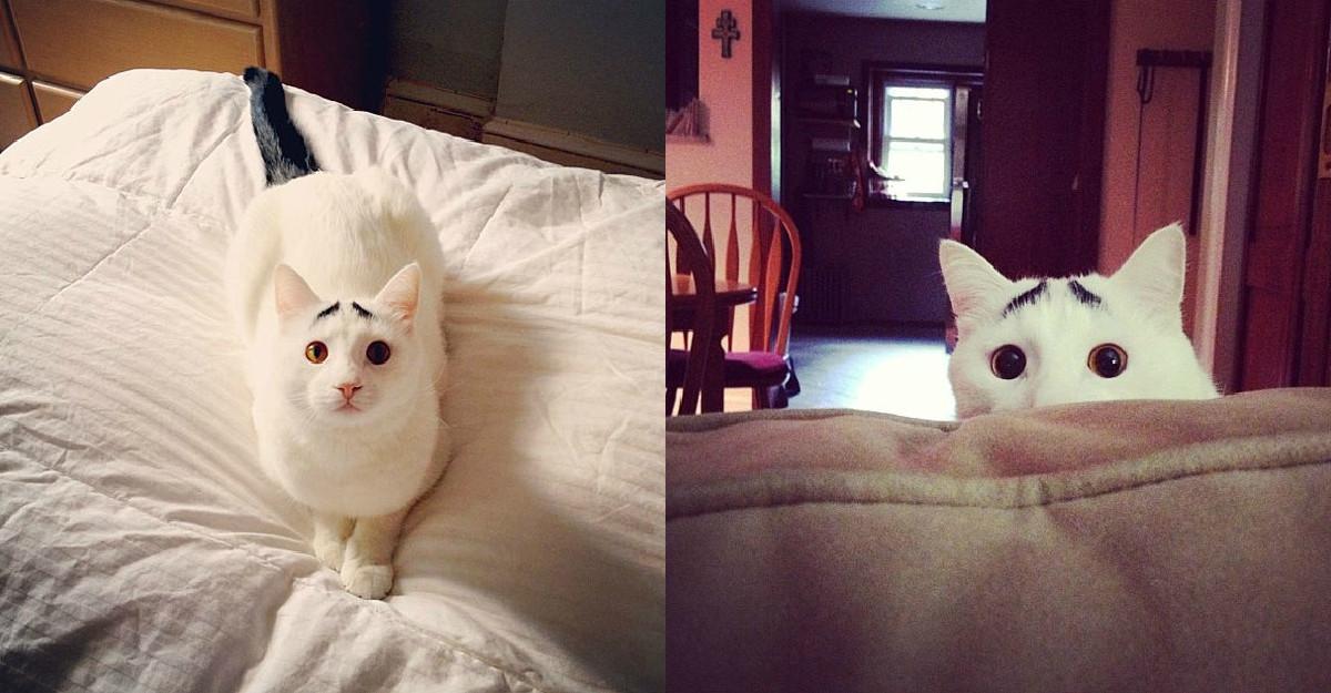 Faceti cunostinta cu Sam, pisicuta cu sprancene