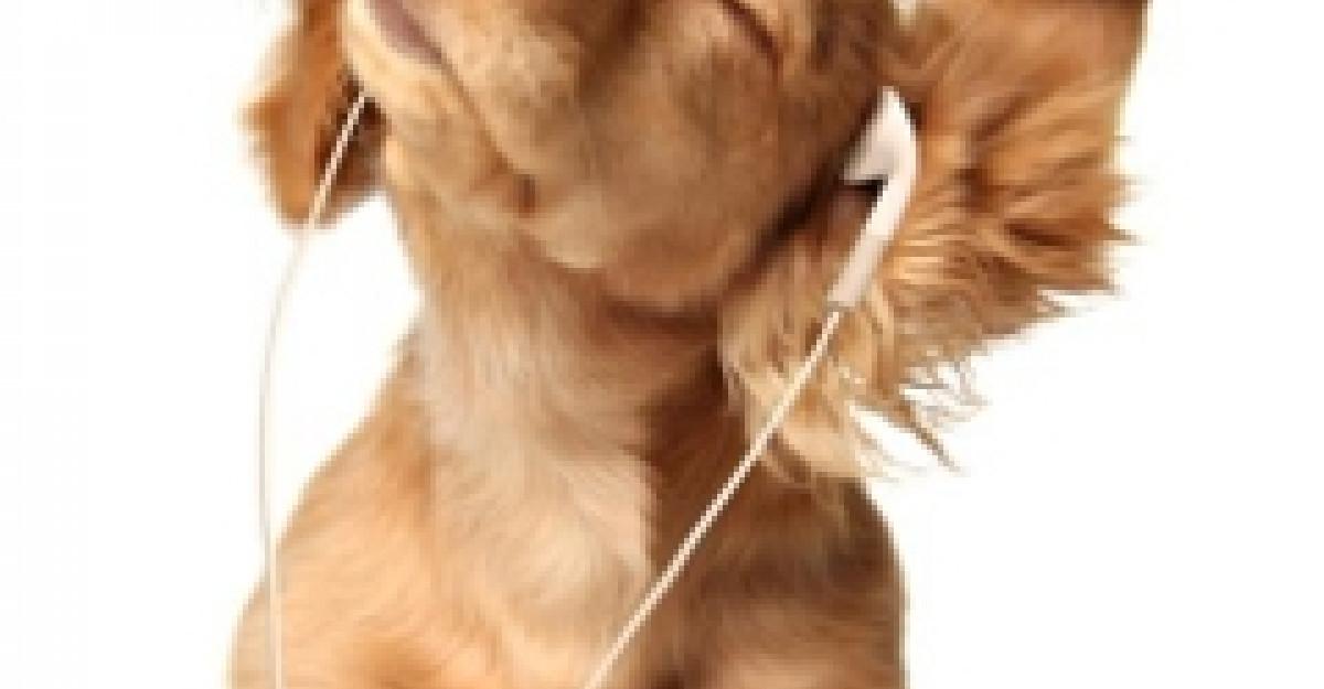 Angajamentofobia: 4 lucruri invatate de la cainele meu