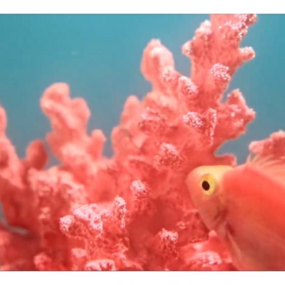 Coralul viu – culoarea anului 2019! Uite ce reprezintă!