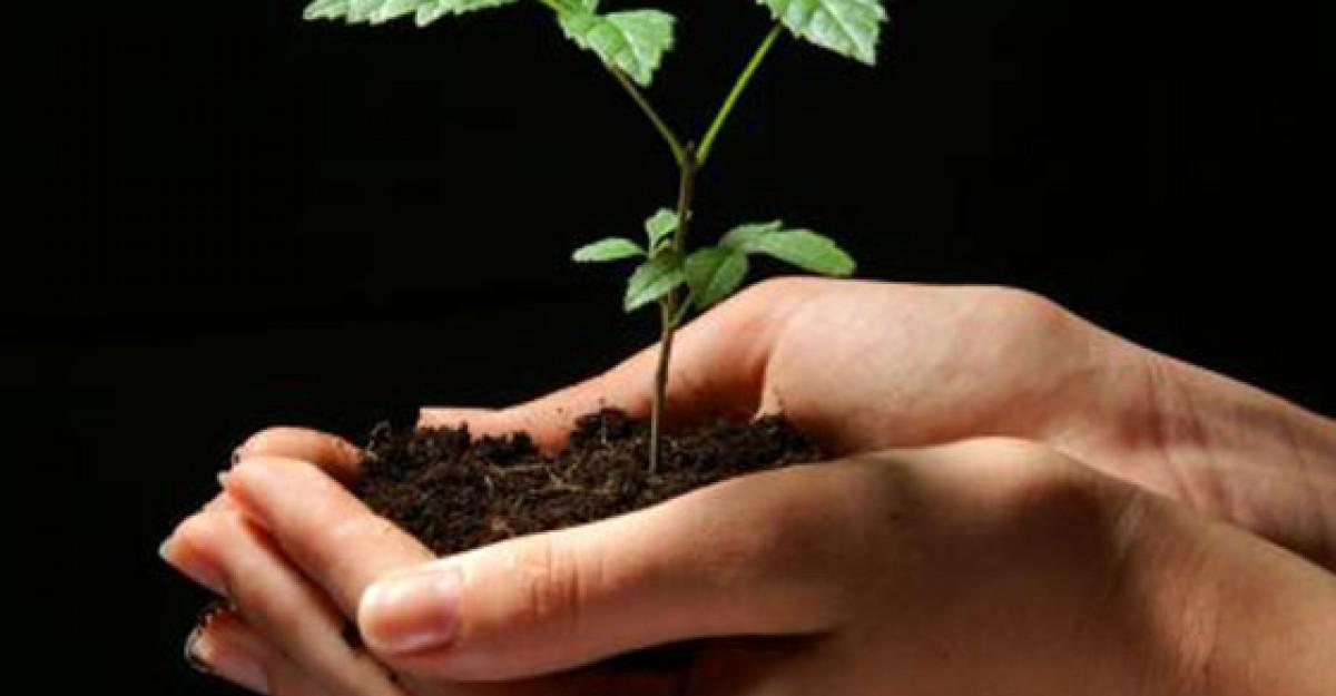 Retete biblice de tratamente naturiste. Hrana vietii