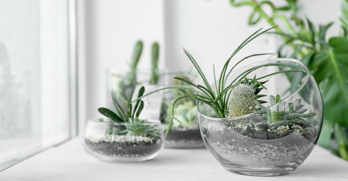Ce plante este bine să ai în casă. Tu le cunoşti beneficiile?