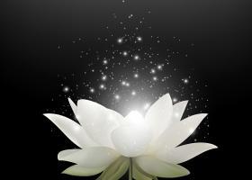 Plante cu efecte magice care te protejeaza impotriva energiilor negative
