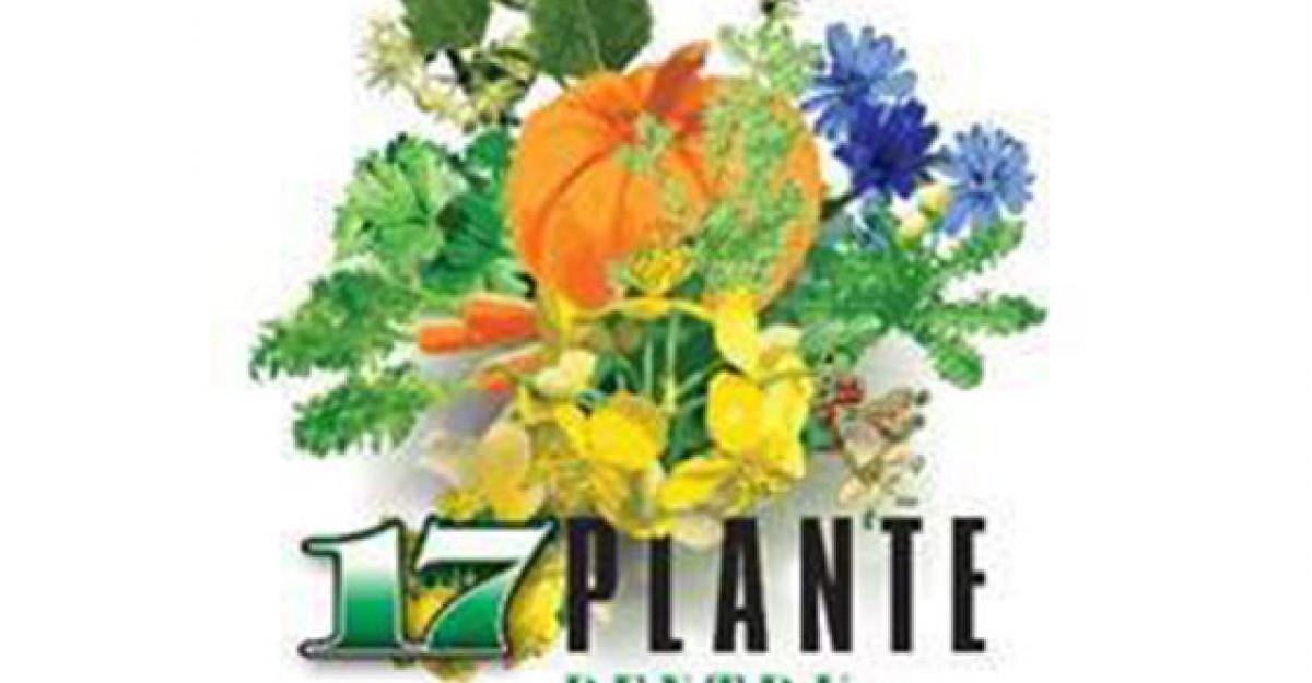 Cele mai folosite 17 plante pentru vindecare