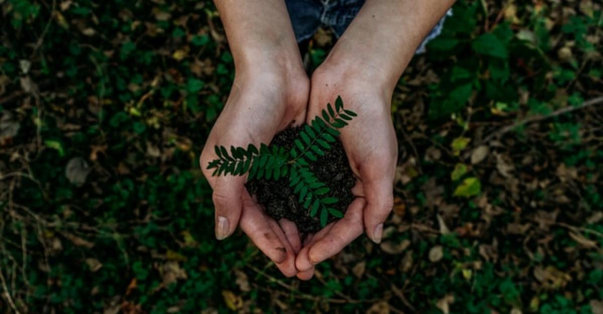 7 acțiuni concrete pentru salvarea mediului