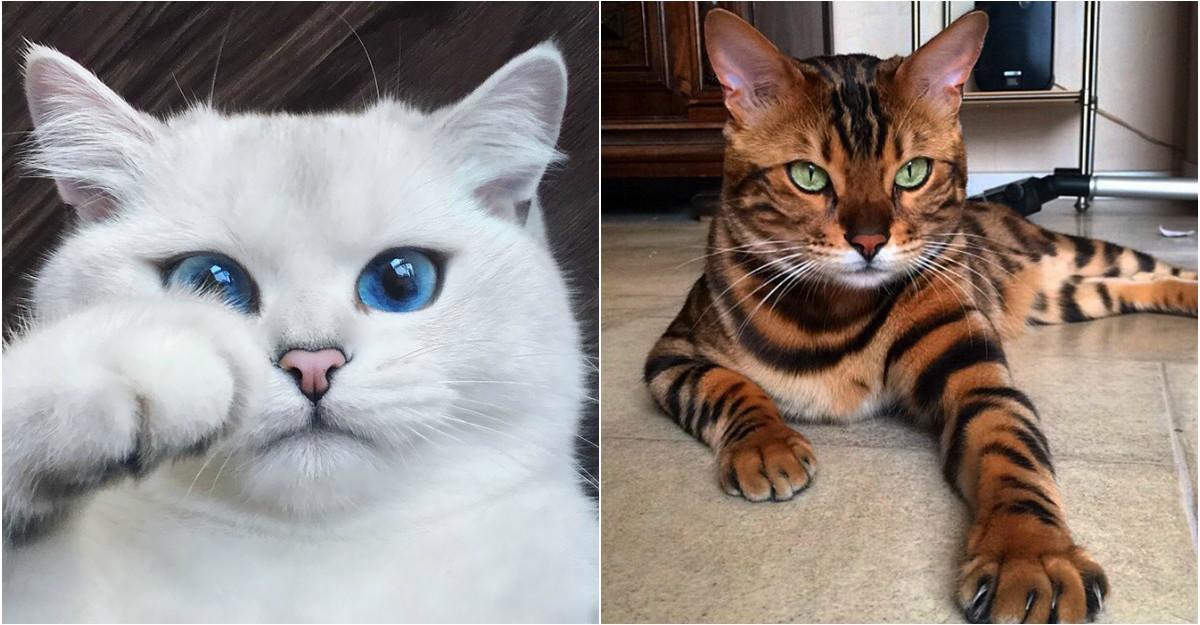 10 Cele mai frumoase pisici din lume