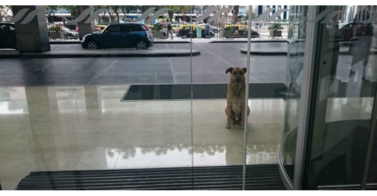 A adoptat un catel care o astepta in fiecare dimineata la usa hotelului unde era cazata