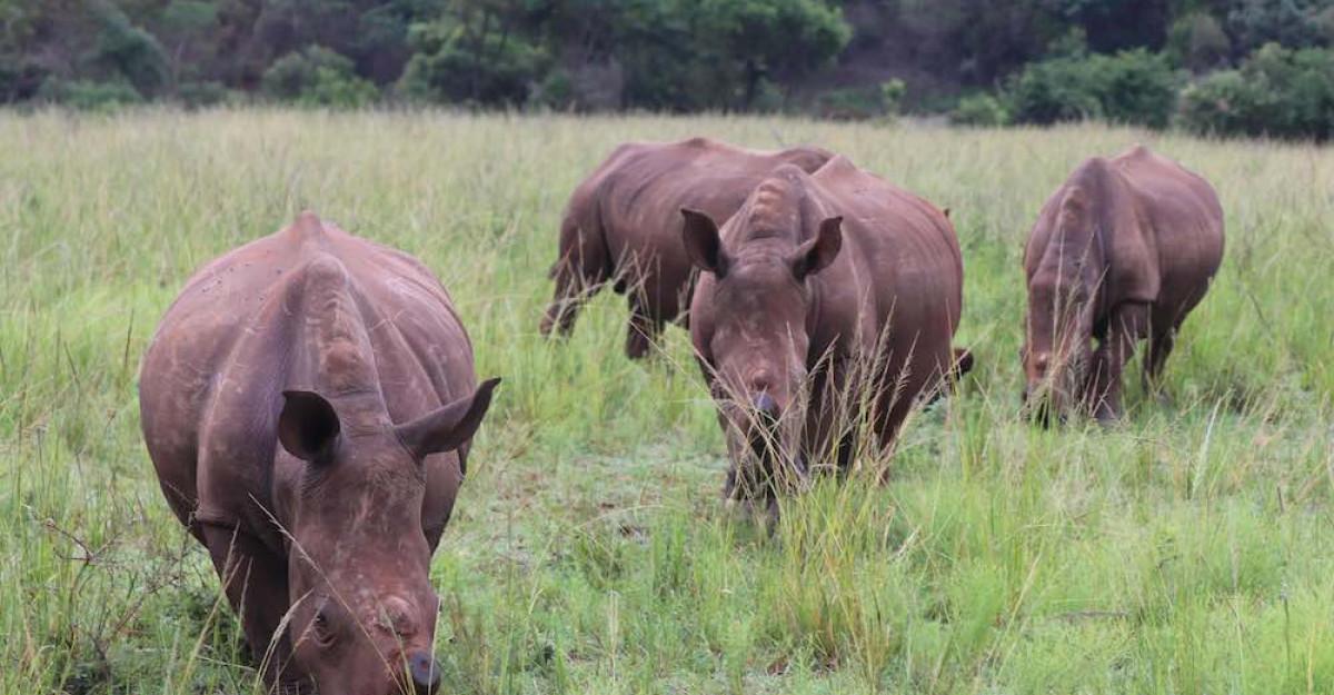 Maria Nila continua campania de caritate Save the Rhino