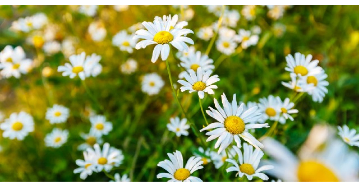 Planta-minune care te ajuta sa scapi de mirosul de transpiratie